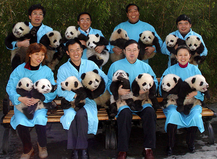 Panda160906_700x514