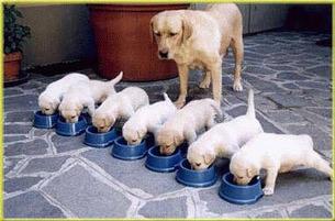 Dogs_discipline_1