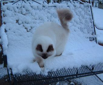 Snowy1web